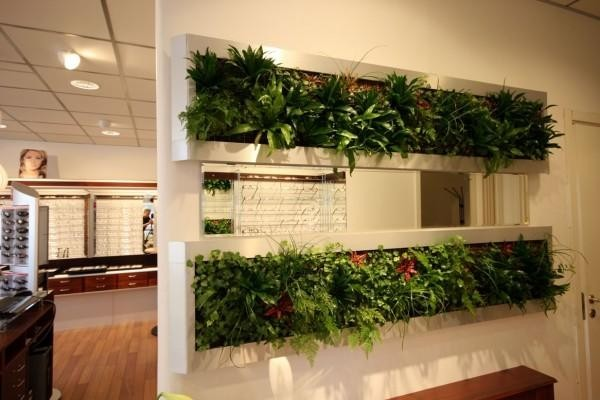 Vách ngăn bằng cây xanh giải pháp đặc biệt sáng tạo cho phòng khách và bếp